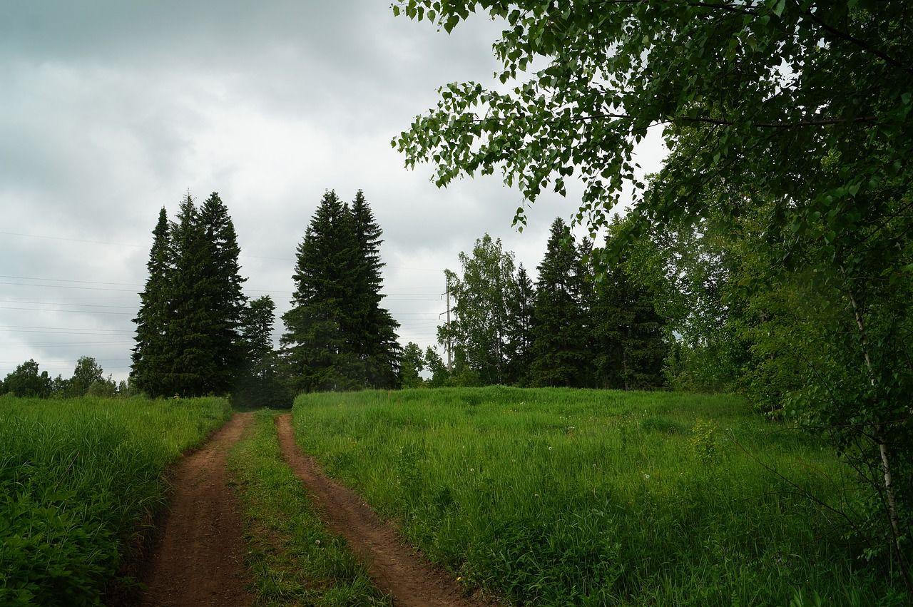 Free Image On Pixabay Forest Silence Nature Landscape In 2020 Nature Landscape Logo Design Tutorial