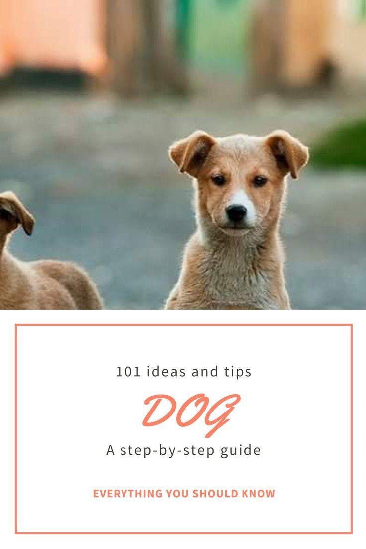 Dog Training Basics: Teaching Fido to Sit forecast