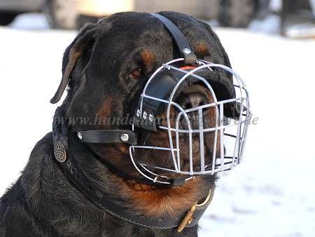 Metallischer Drahtmaulkorb Hund Mit Polsterung Baby Rottweiler Rottweiler Haustiere