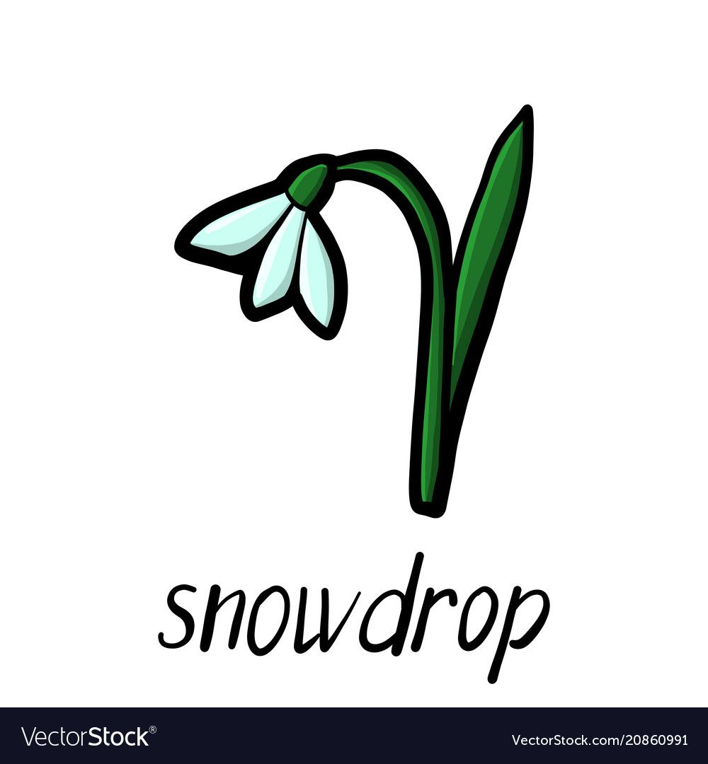 Flower Of Snowdrop Vector Image On Vector Images Vector Flowers Vector