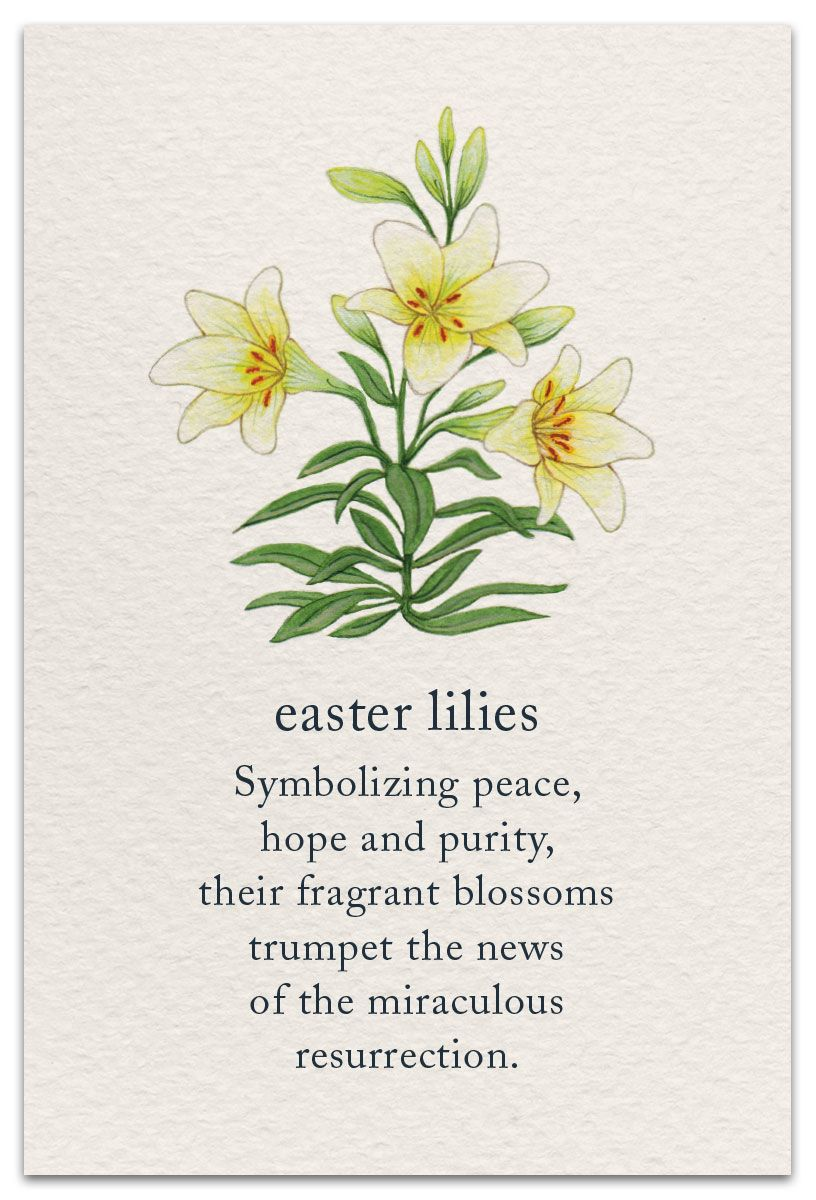 Easter Lilies Flower Quotes Flower Meanings Language Of Flowers