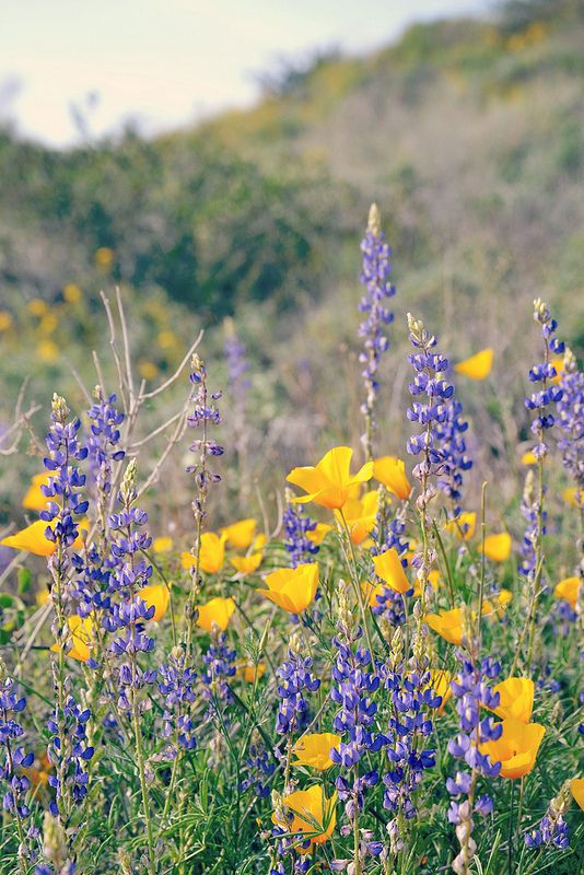 2 Arizona plants, Desert botanical garden, Botanical gardens