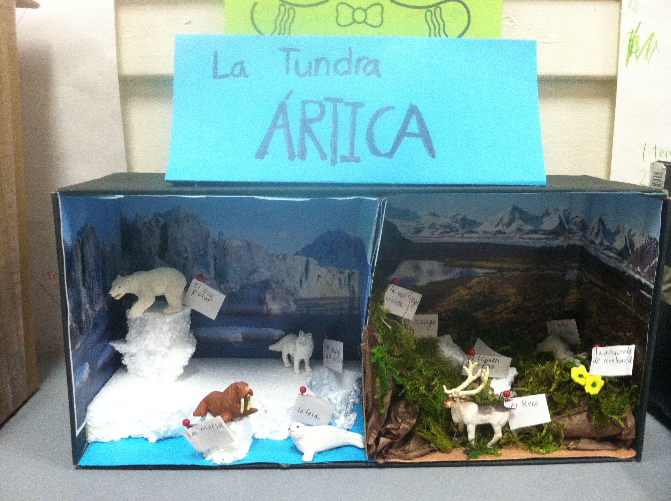 Biorama Biome Diorama Made By One Of My 3rd Grade