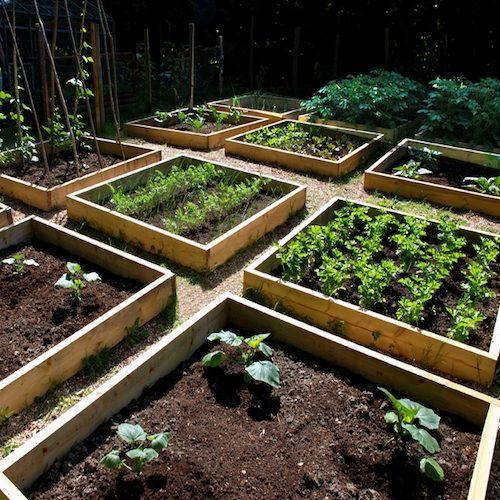 Urban Vegetable Gardening For Beginners: Growing Vegetables In Urban Planters
