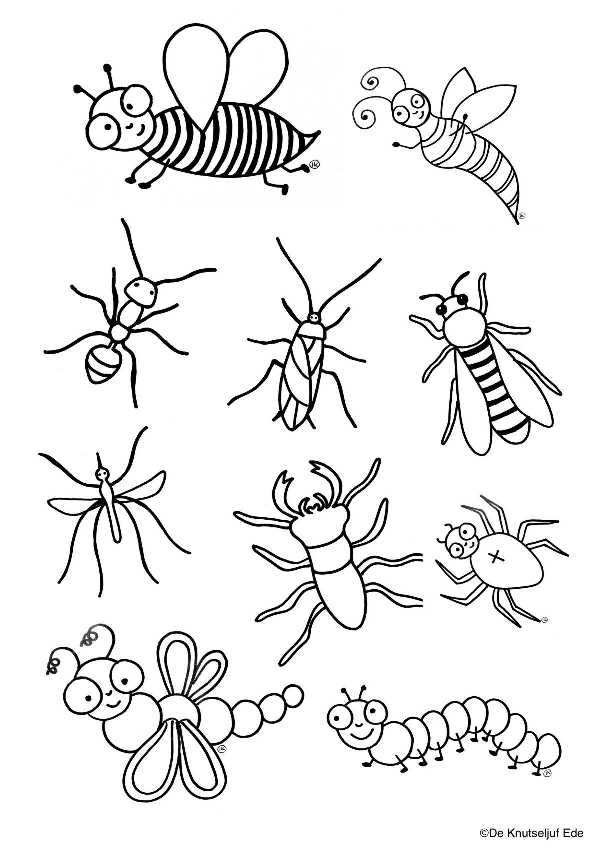Kleurplaten Kriebelbeestjes Insekten Kleurplaat Kleurplaten Deknutseljuf Sprinkhaan De Knutseljuf Ede Kleurplaten Thema Sprinkhaan