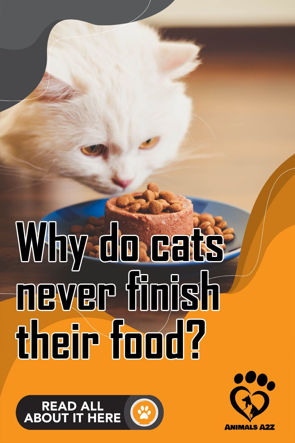 Why Do Cats Never Finish Their Food In 2020 Kitten Health It Is Finished Cat Facts