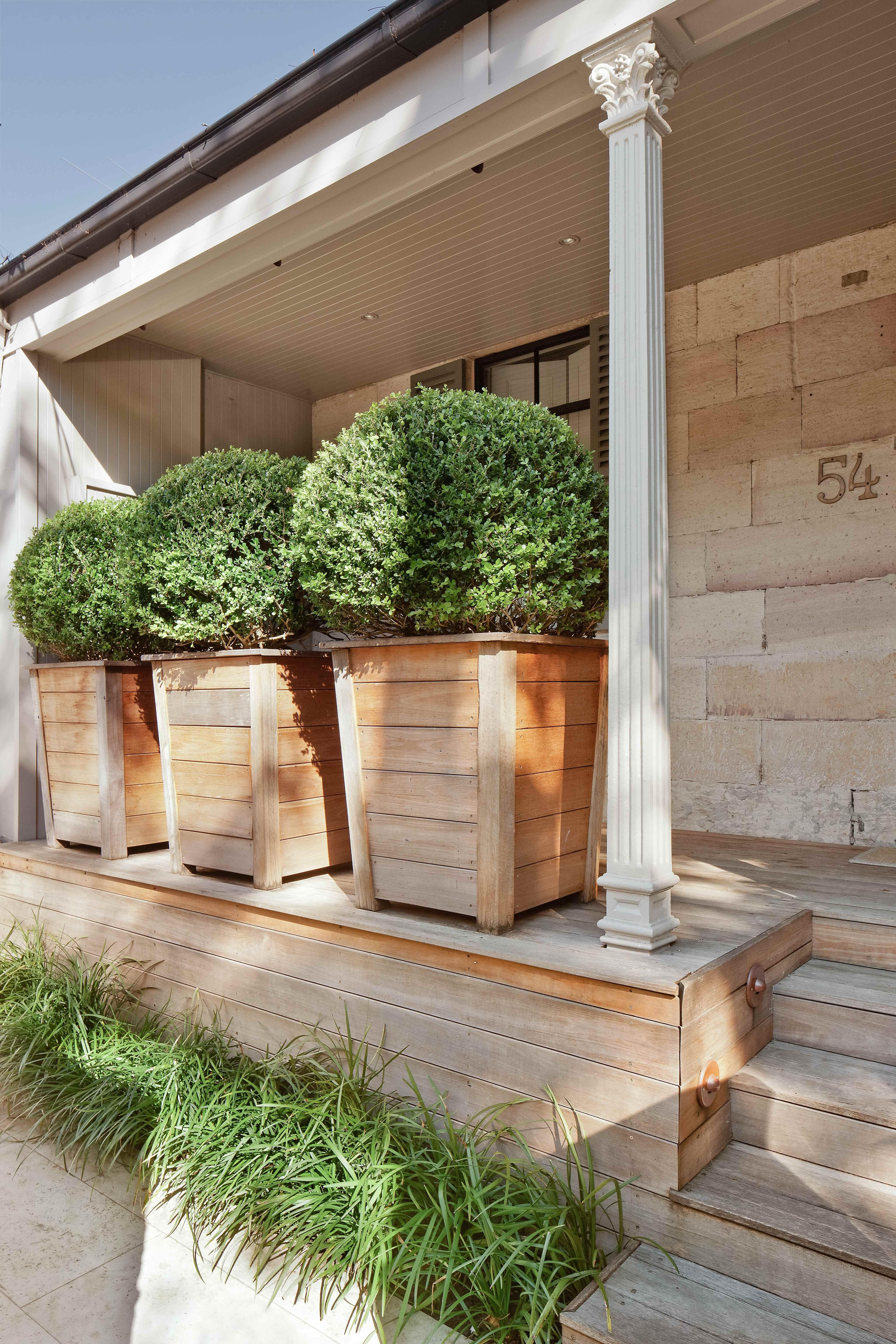 buxus balls in custom hampton s new guinea rose wood pots liriope