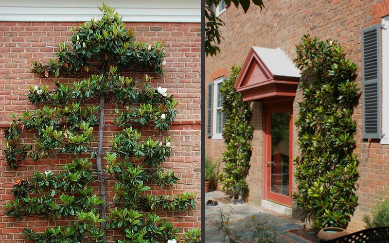 How To Espalier Plants Trees From The Experts At Wilson Bros