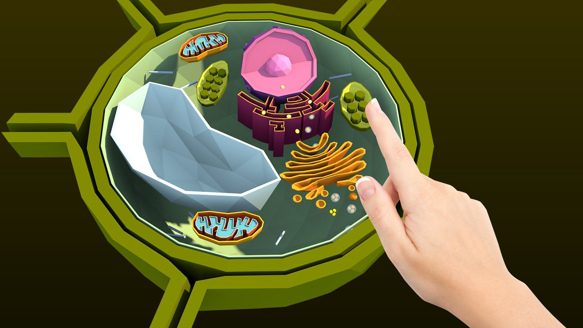 Biology with NAMOO: Plant Cell Structure (With images ...