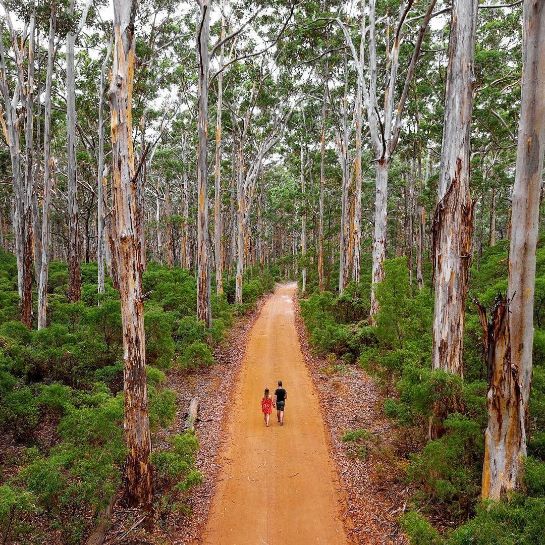 boranup forest  margaret river region