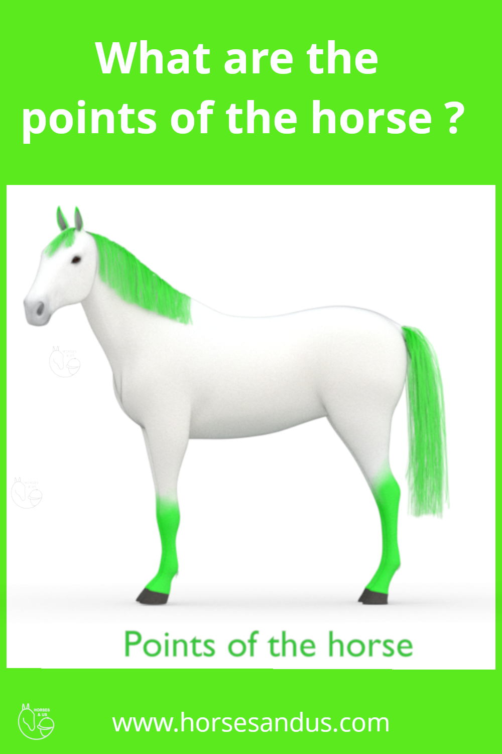 The Points Of The Horse In 2020 Horse Coat Colors Colorful Coat Horses