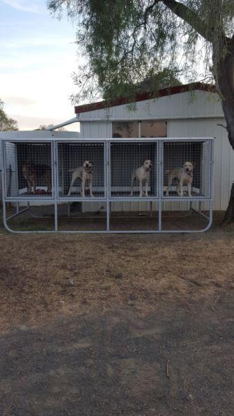 Http Www Gumtree Com Au S Ad Gunnedah Pet Products Raised Dog