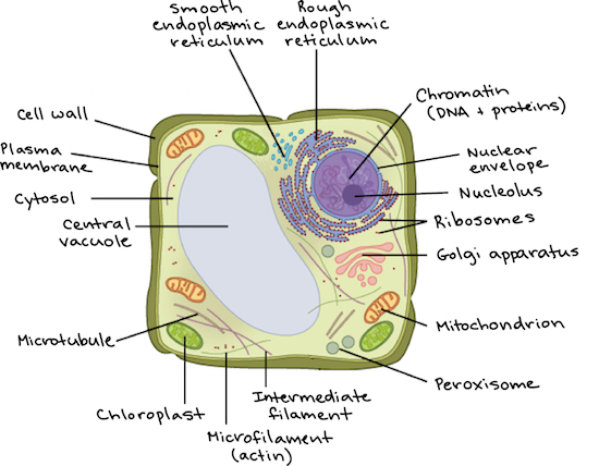 intro to eukaryotic cells