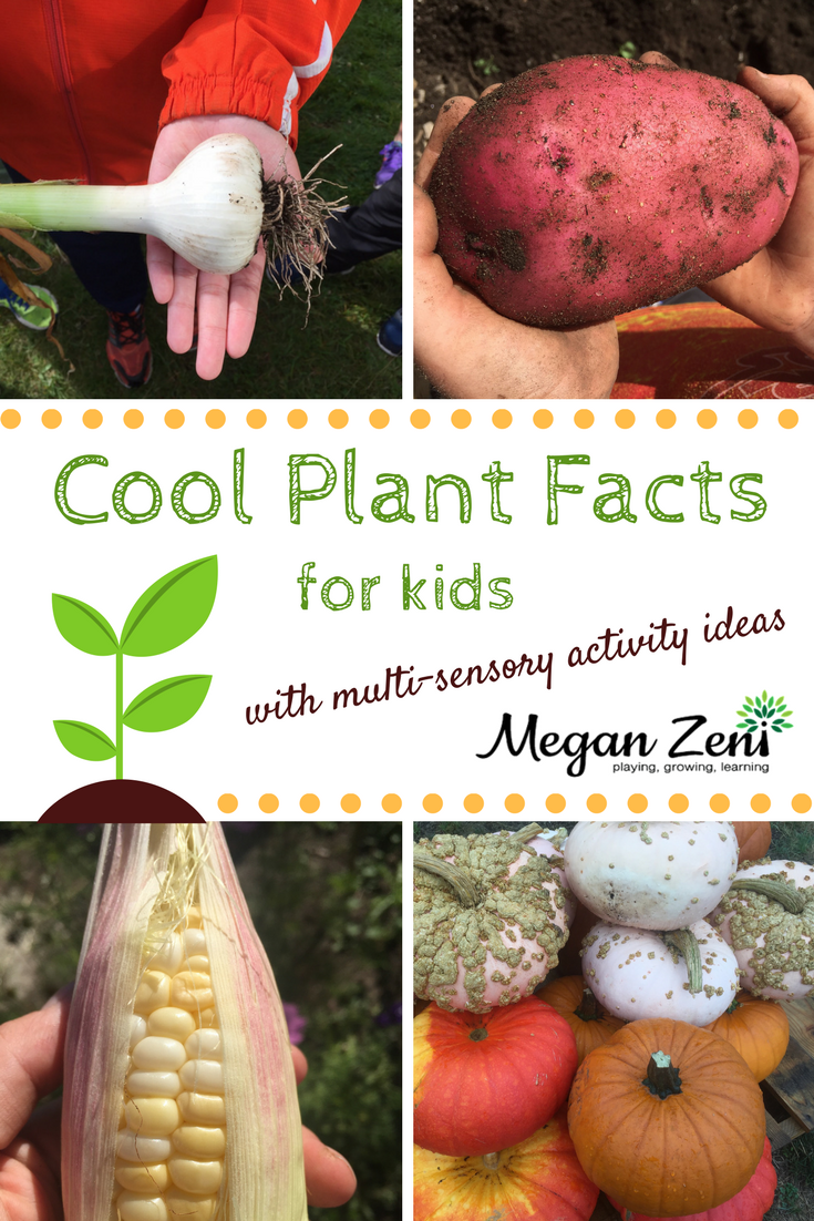 Cool Plant Facts For Kids | Facts for kids, Cool plants ...