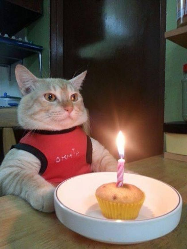 27 Cats Who Are Moderately Excited About Their Birthdays Funny Animals Crazy Cats Cat Birthday