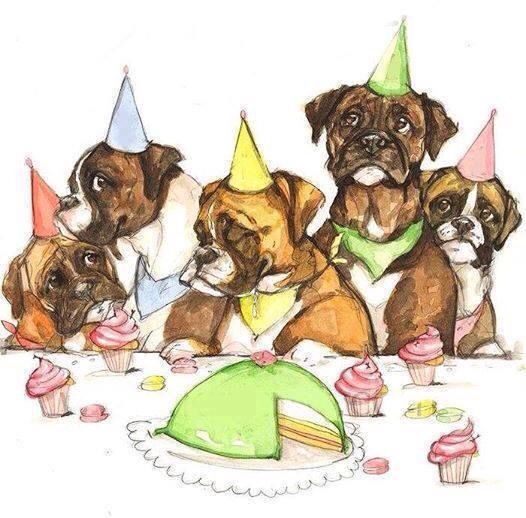 Bildergebnis für happy birthday boxer hund comic