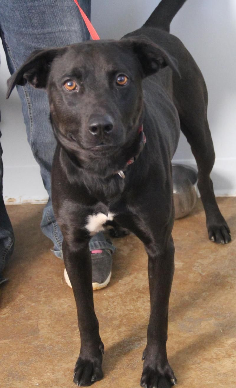 Adopt Manning Cell Dog On Petfinder Dog Pounds Dog Adoption Black Dog