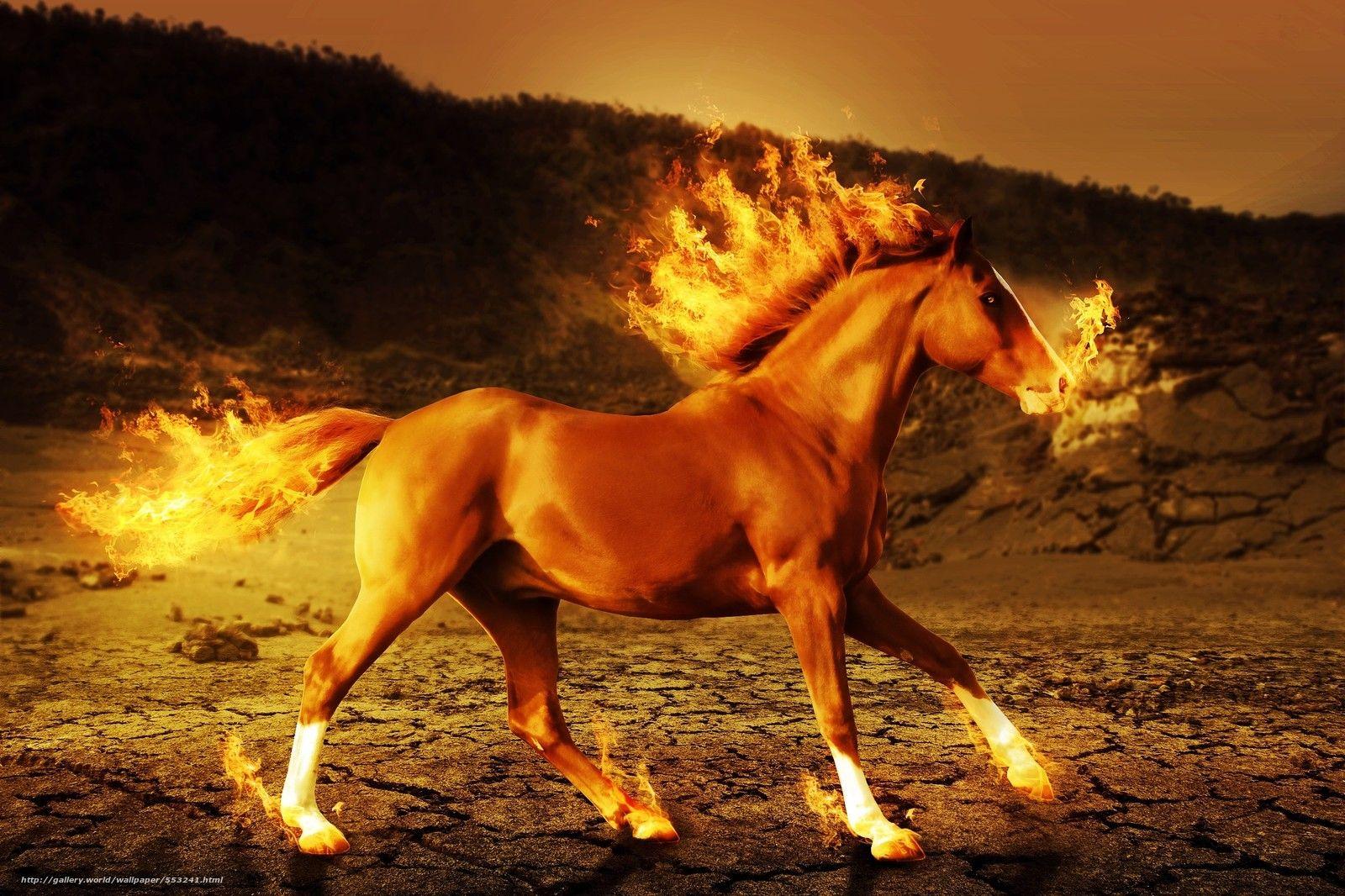Top Wallpaper Horse Android - 39be0990e016b6e606a396830ef06d0f  Trends_573121.jpg