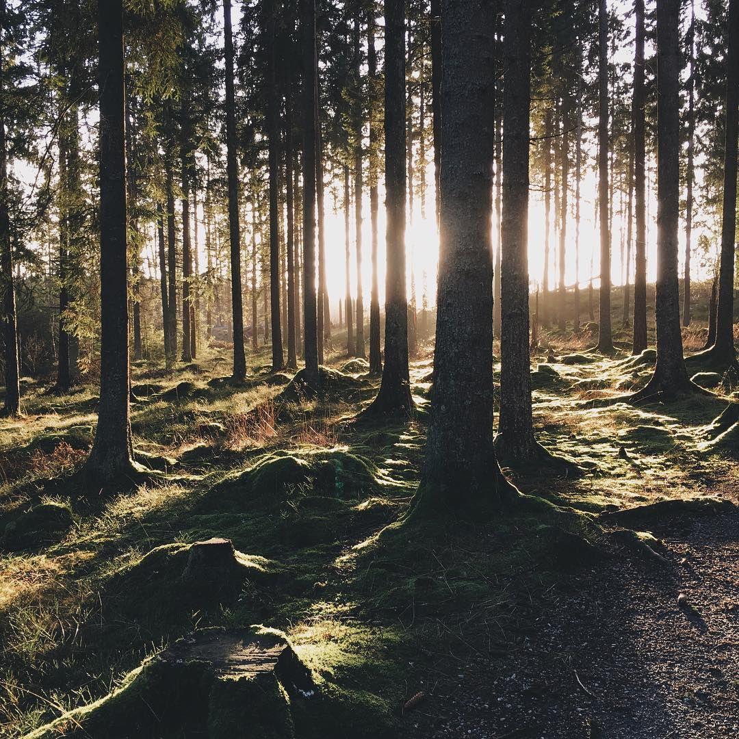 """""""The winter sun stretches ☀️"""""""