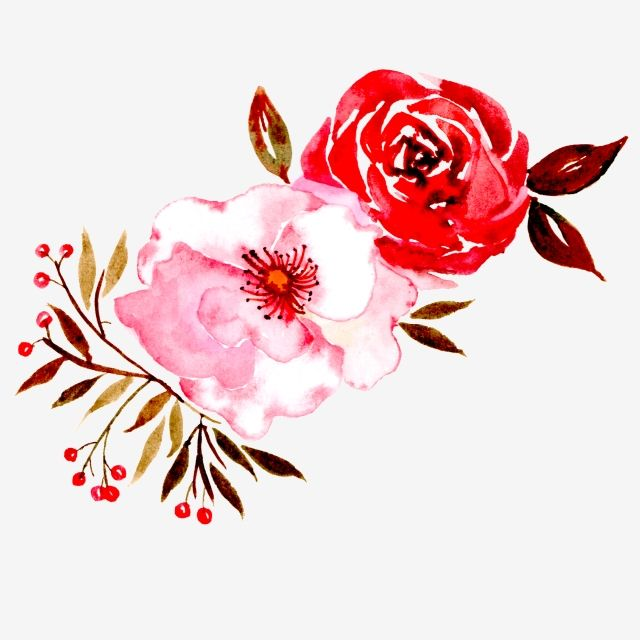 Red Flowers Safflower Branch Flowers Png Transparent Clipart Image And Psd File For Free Download Flower Illustration Flower Drawing Red Flowers