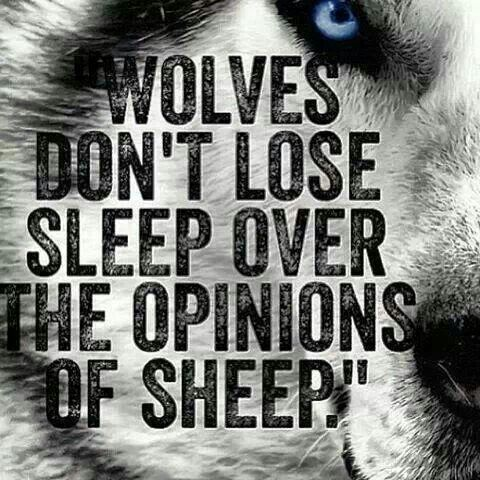 Haters Keep Hating True Quotes Wolf Quotes Care Quotes