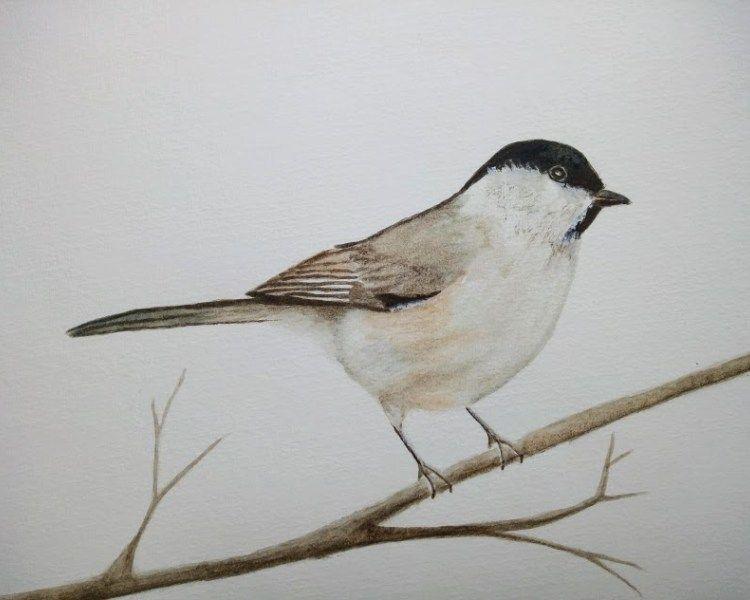 Tuto Aquarelle Comment Peindre Un Oiseau En 2020 Aquarelle