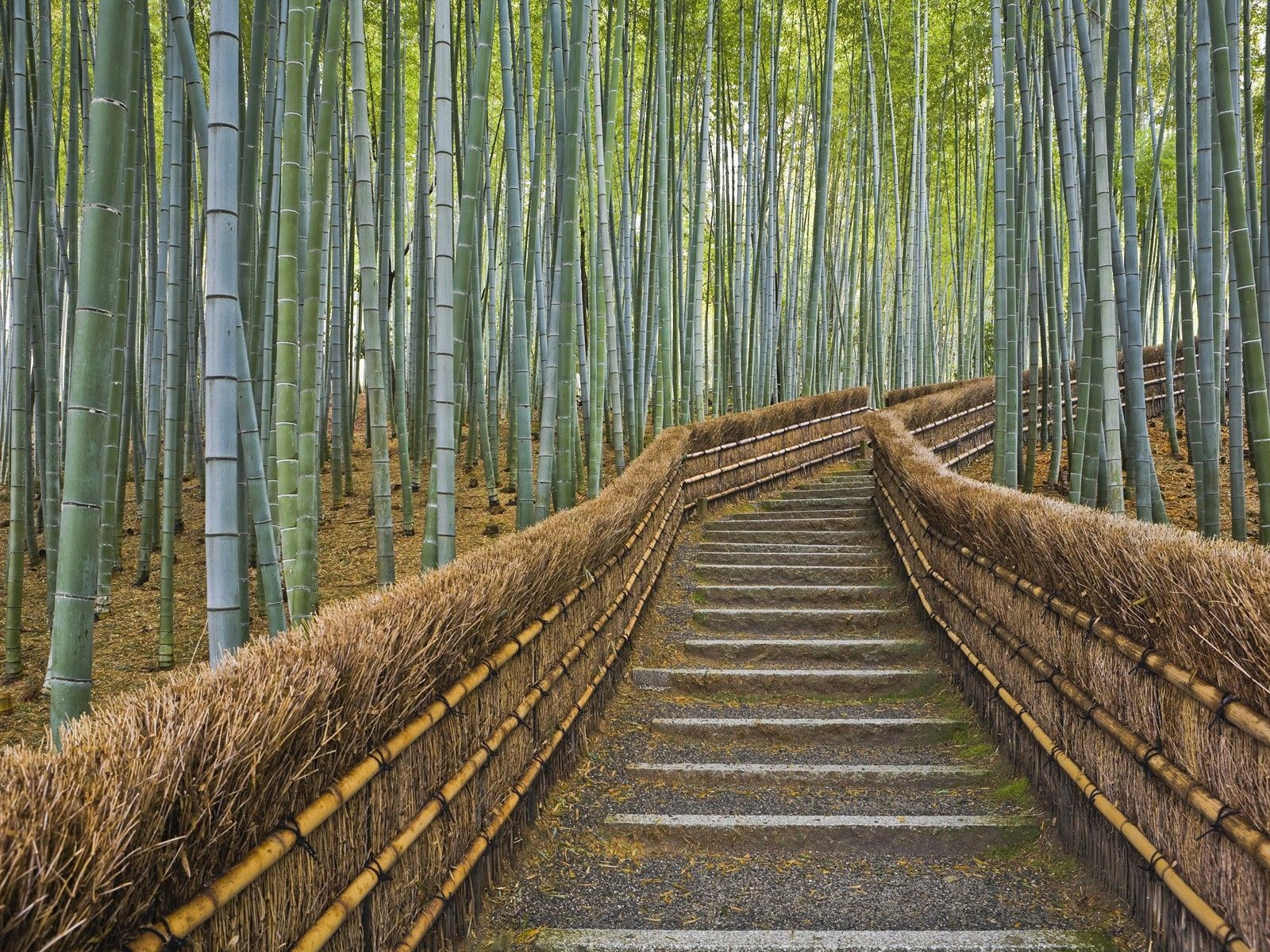 Japan nature bamboo path kyoto temple (1600x1200, nature, bamboo, path, kyoto, temple)  via www.allwallpaper.in