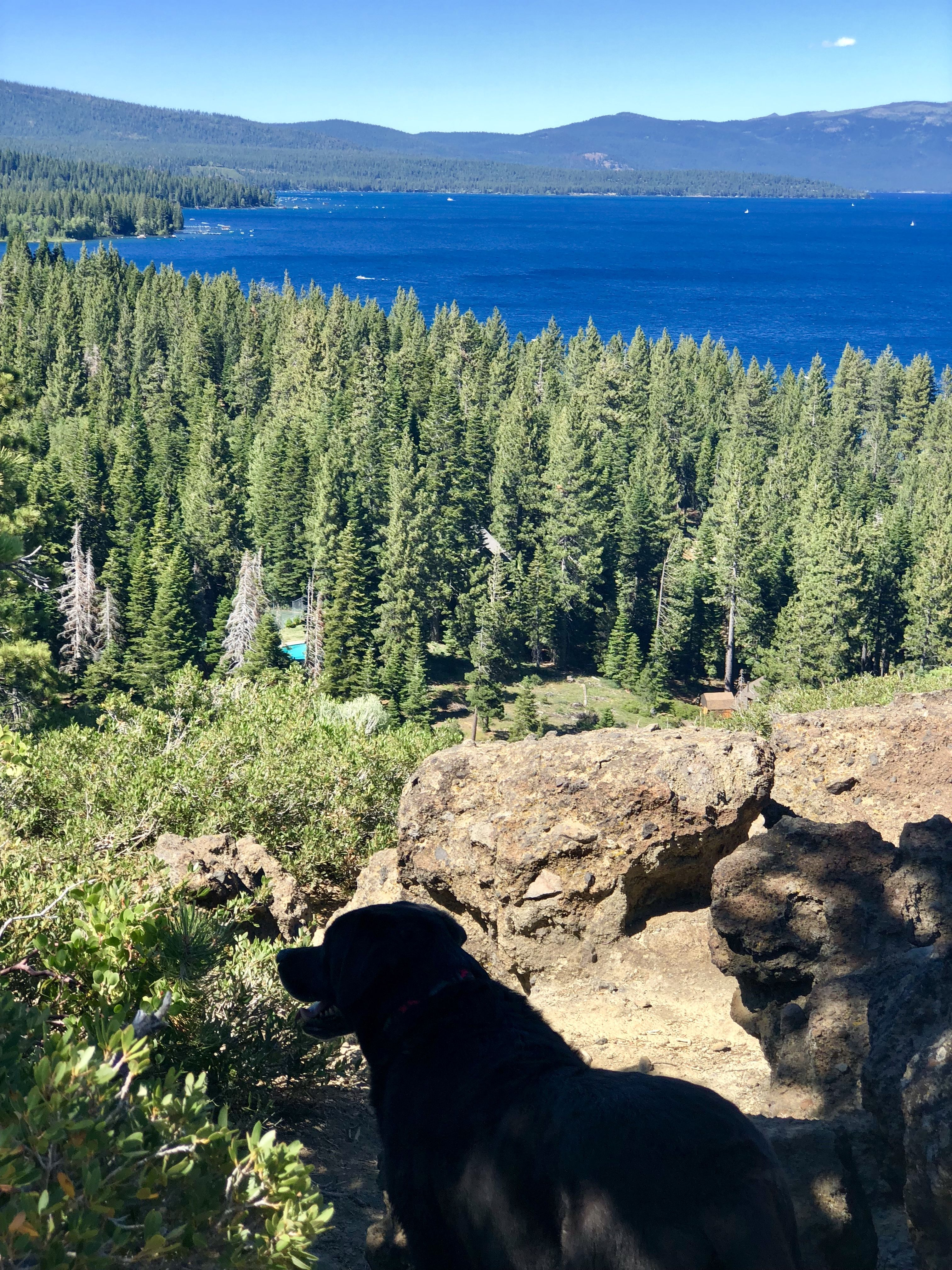 Best Hikes For Kids Dogs At Lake Tahoe Girl Who Travels The