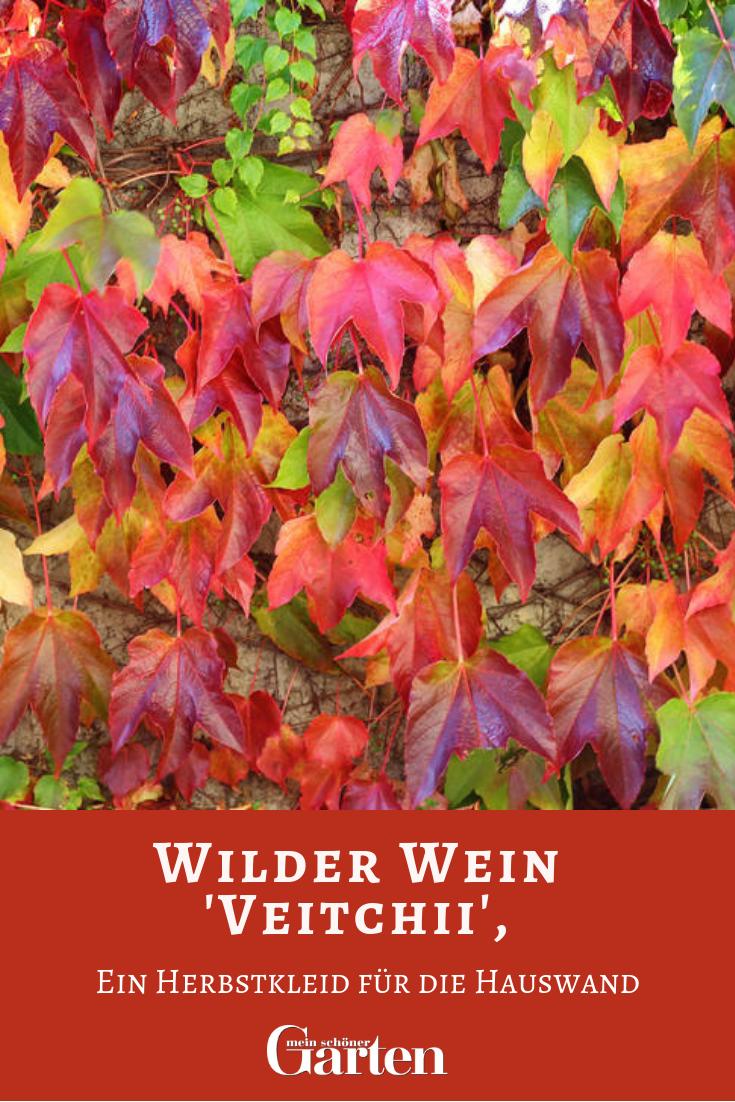 Wilder Wein Ein Herbstkleid Fur Die Hauswand Garden With