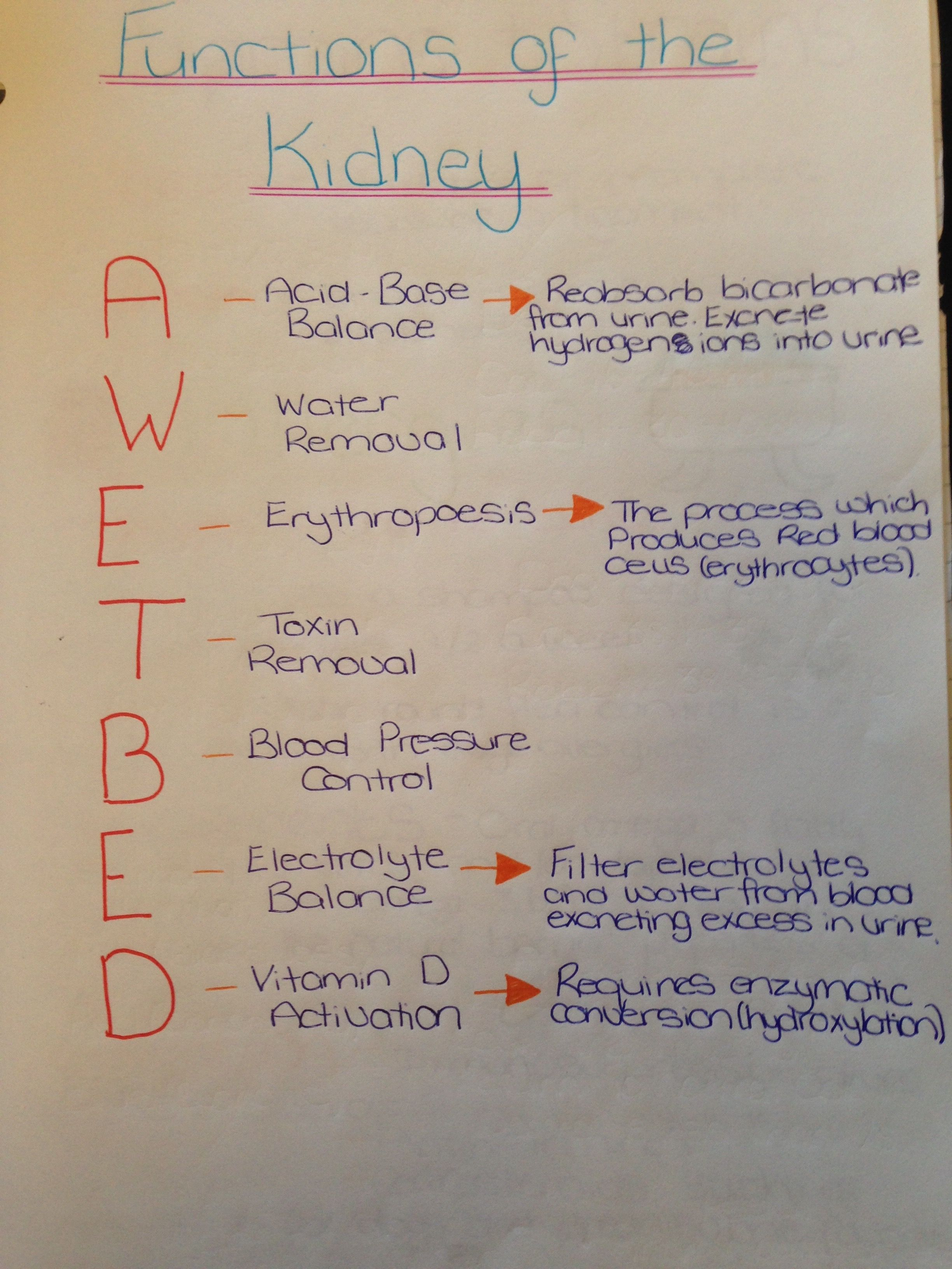 Kidney Function Test #nursingstudents
