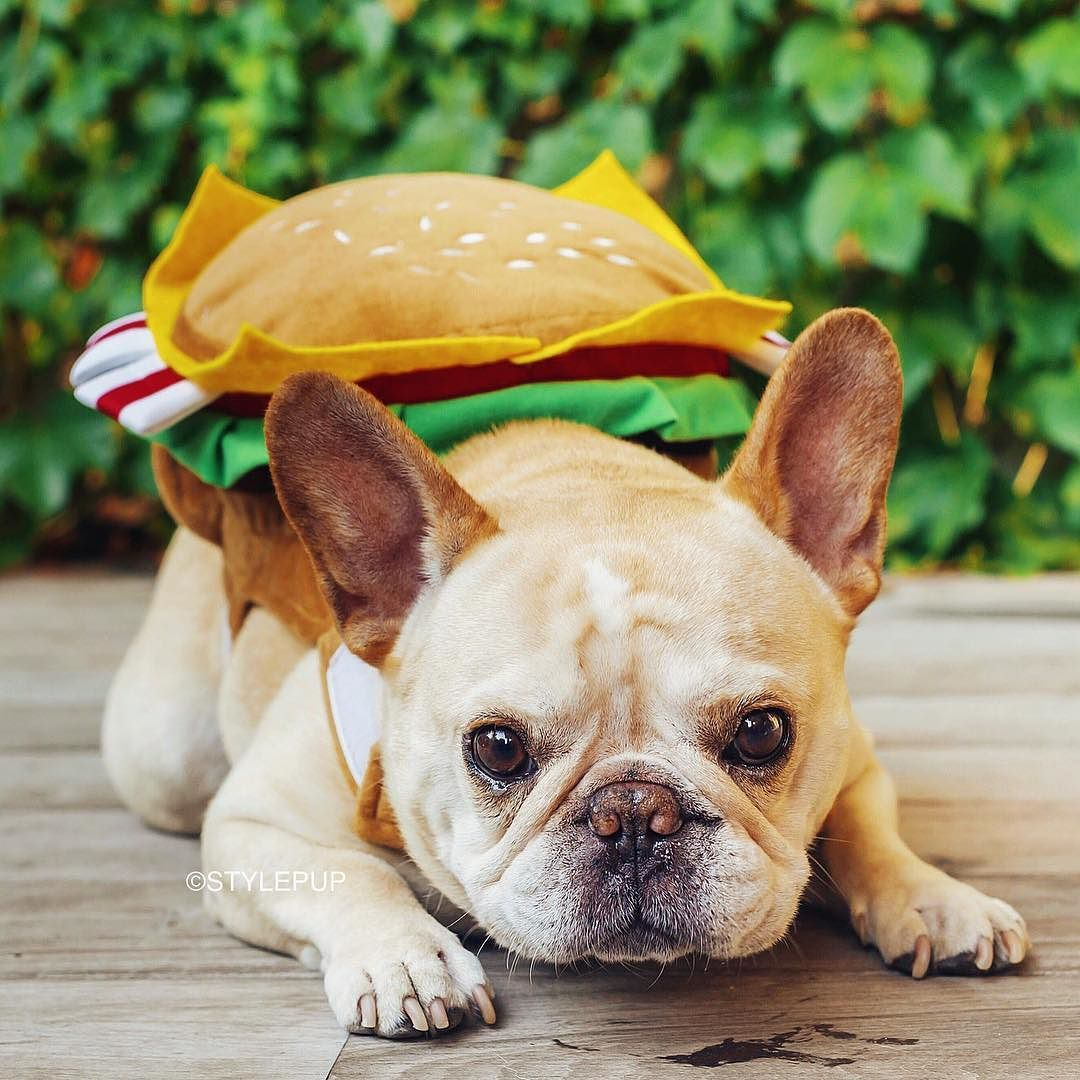 French Bulldog In Sandwich Costume French Bulldogs Dogs Dog