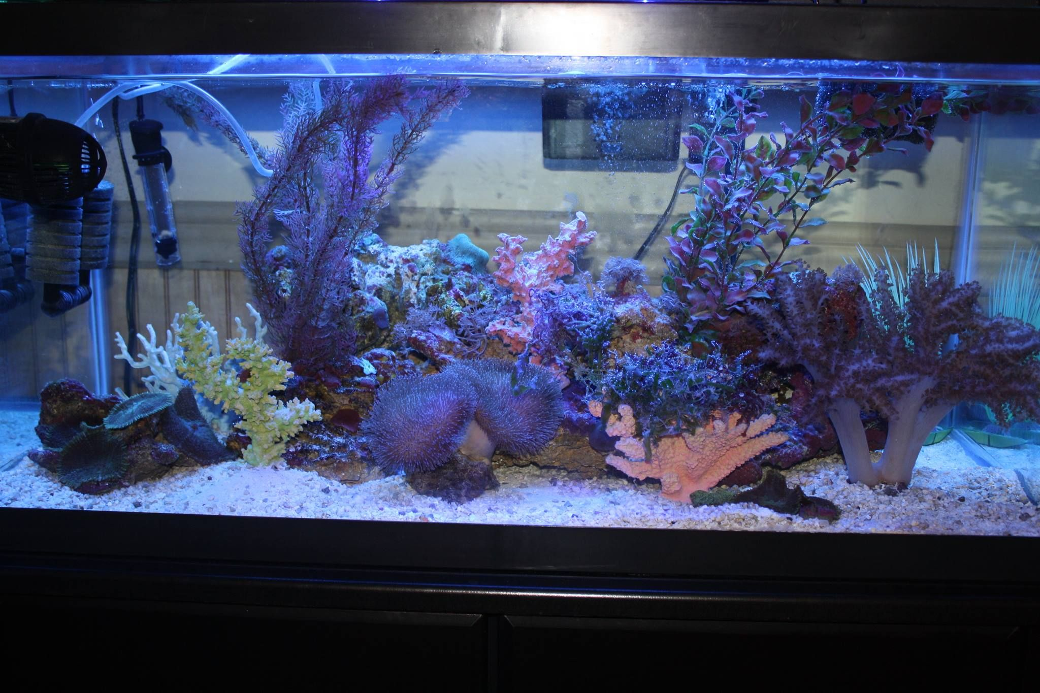 Dana Bailey – This is a seahorse tank set up it has mustangs in it