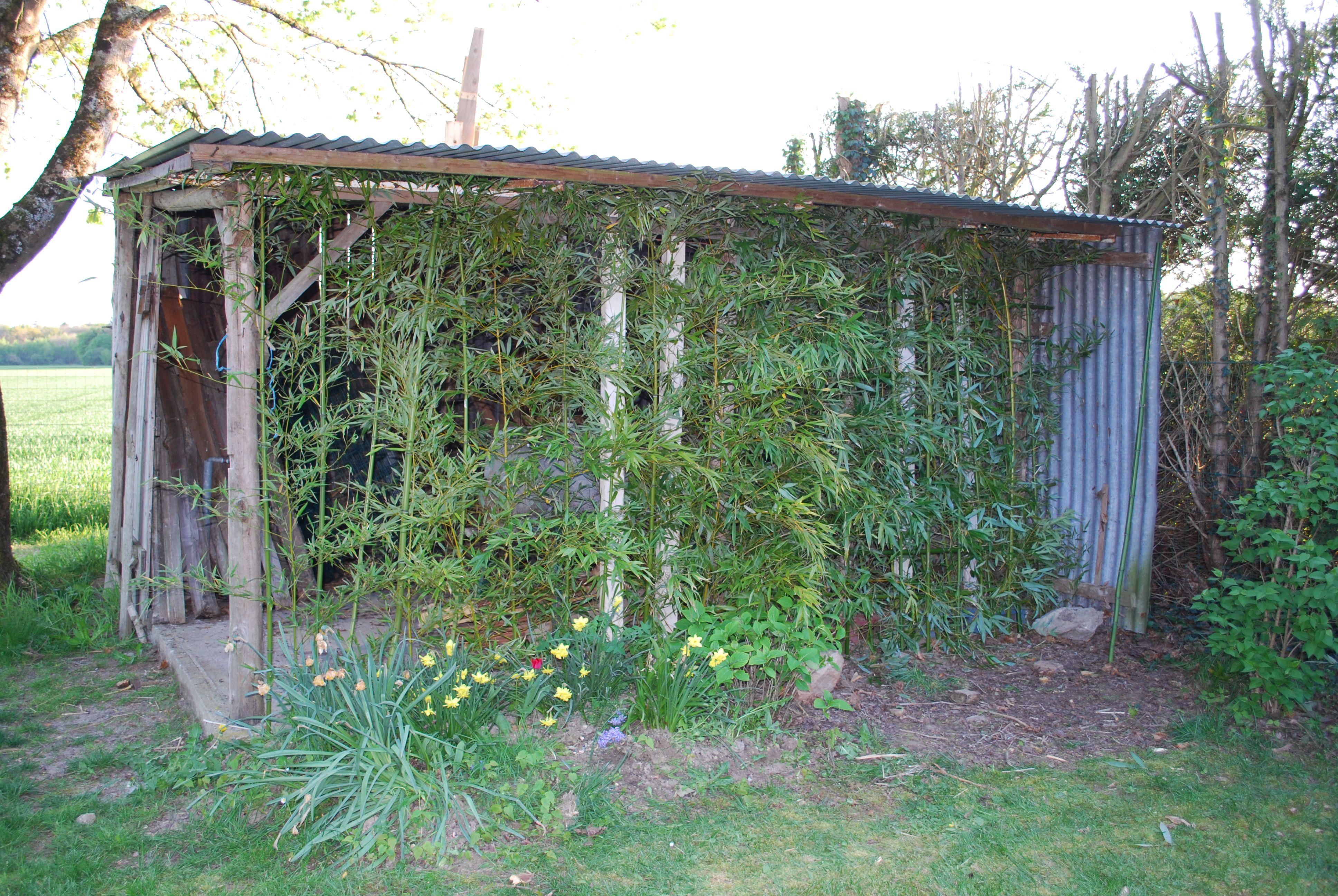 39c1df0cde96f01b2518aad61bae15a4 Frais De Petit Abri Jardin Concept