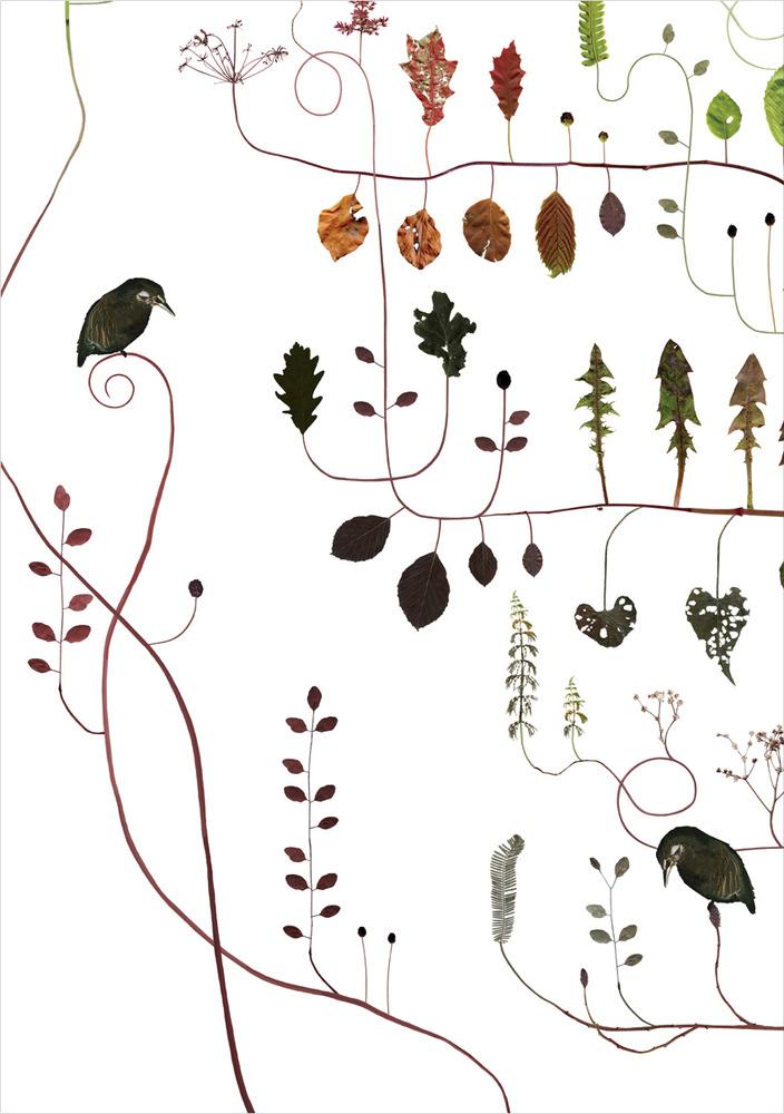 Poster Hornbeam Tree - detail - by Lotta Olson - Lottas Trees