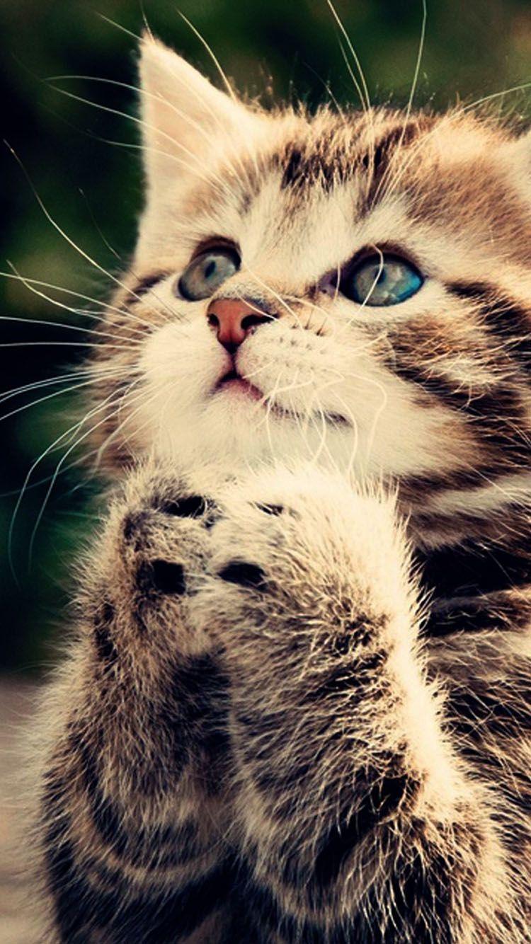 お願いする猫 Iphone6 壁紙 可愛すぎる動物 美しい猫 かわいい子猫