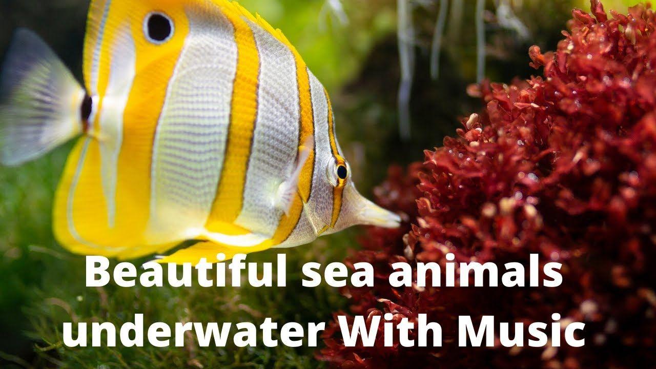 Beautiful Sea Animals Underwater Video With Music In 2020 Sea Animals Underwater Video Underwater