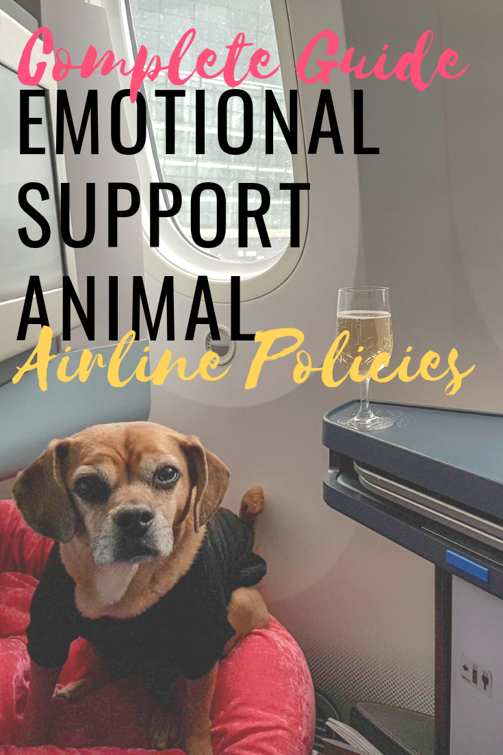 Complete Guide To Airline Policies For Emotional Support Animals