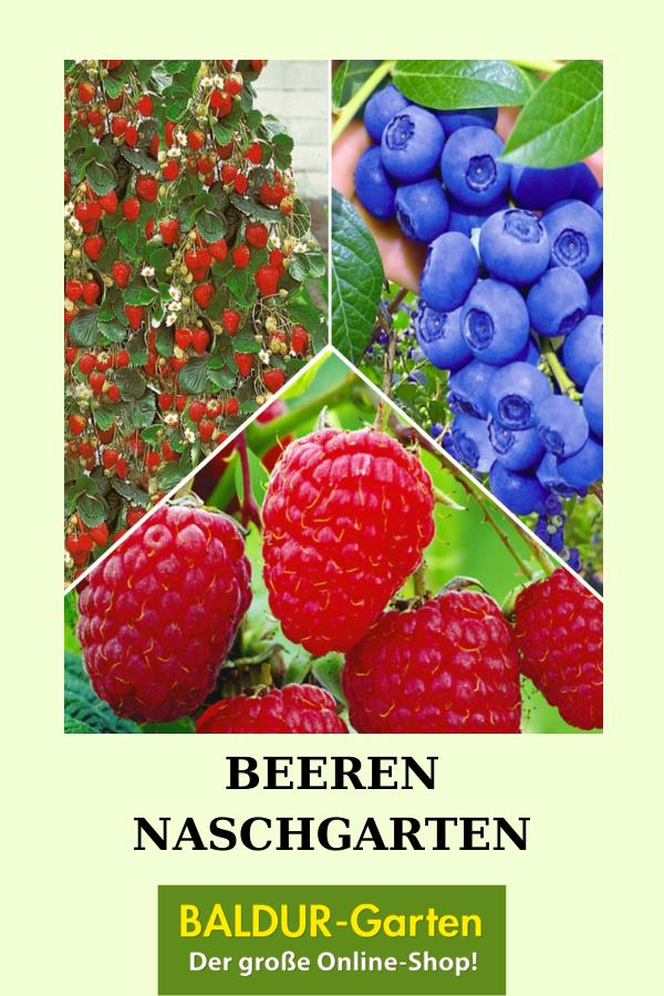 Beeren Naschgarten Erdbeeren Bei Baldur Garten Himbeerpflanzen Erdbeeren Straucher Pflanzen