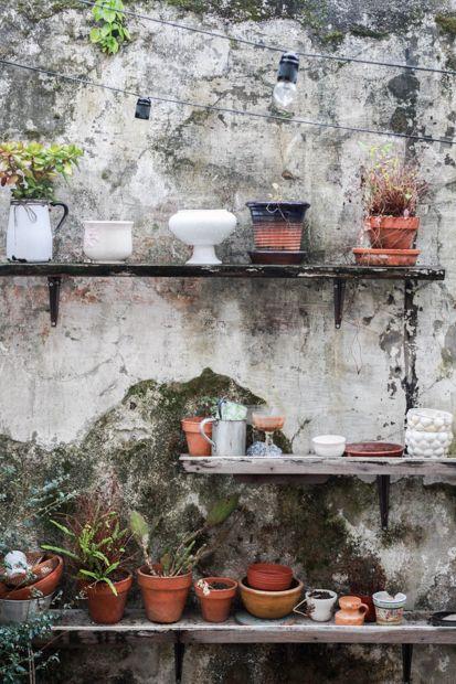 plantas en oporto
