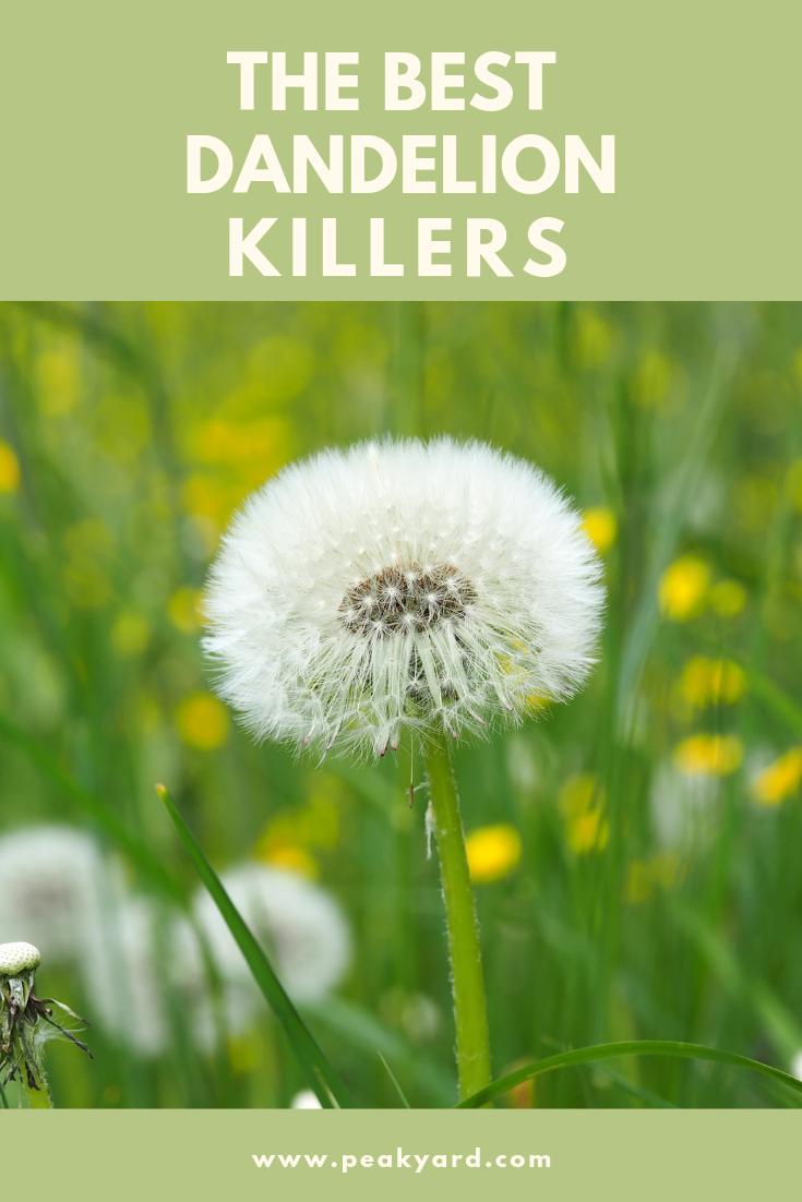 The Best Dandelion Killers For 2020 Peak Yard Dandelion Get Rid Of Dandelions Weeds In Lawn