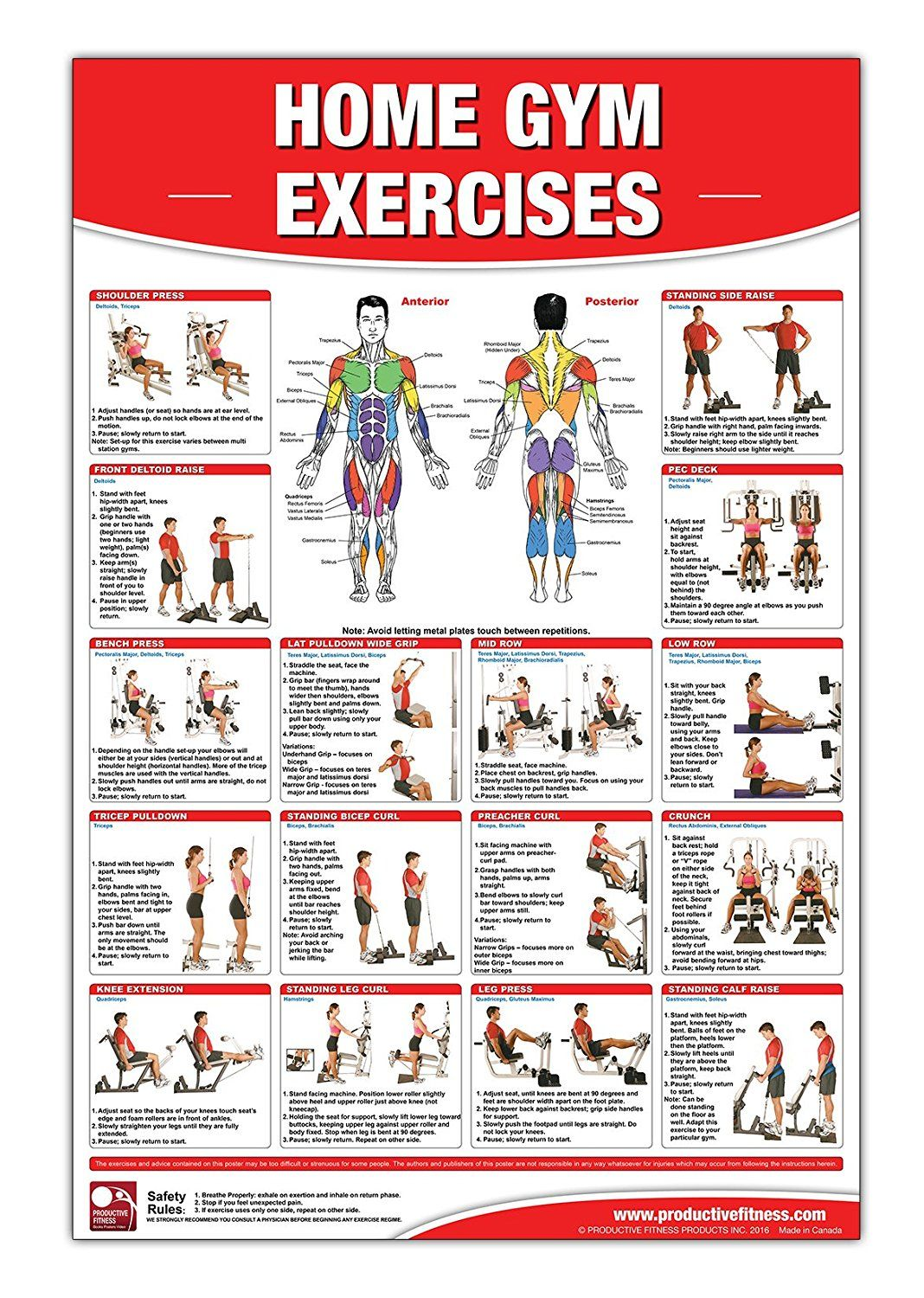 Gold's Gym Xrs 50 Exercise Chart Pdf : gold's, exercise, chart, Exercise, Ideas, Workout, Chart,, Exercises