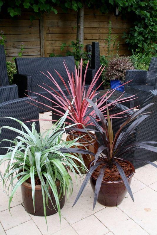 Astelia Silver Shadow Cordyline Charlie Boy Cordyline Renegade Plants Diy Garden Garden Landscape Design