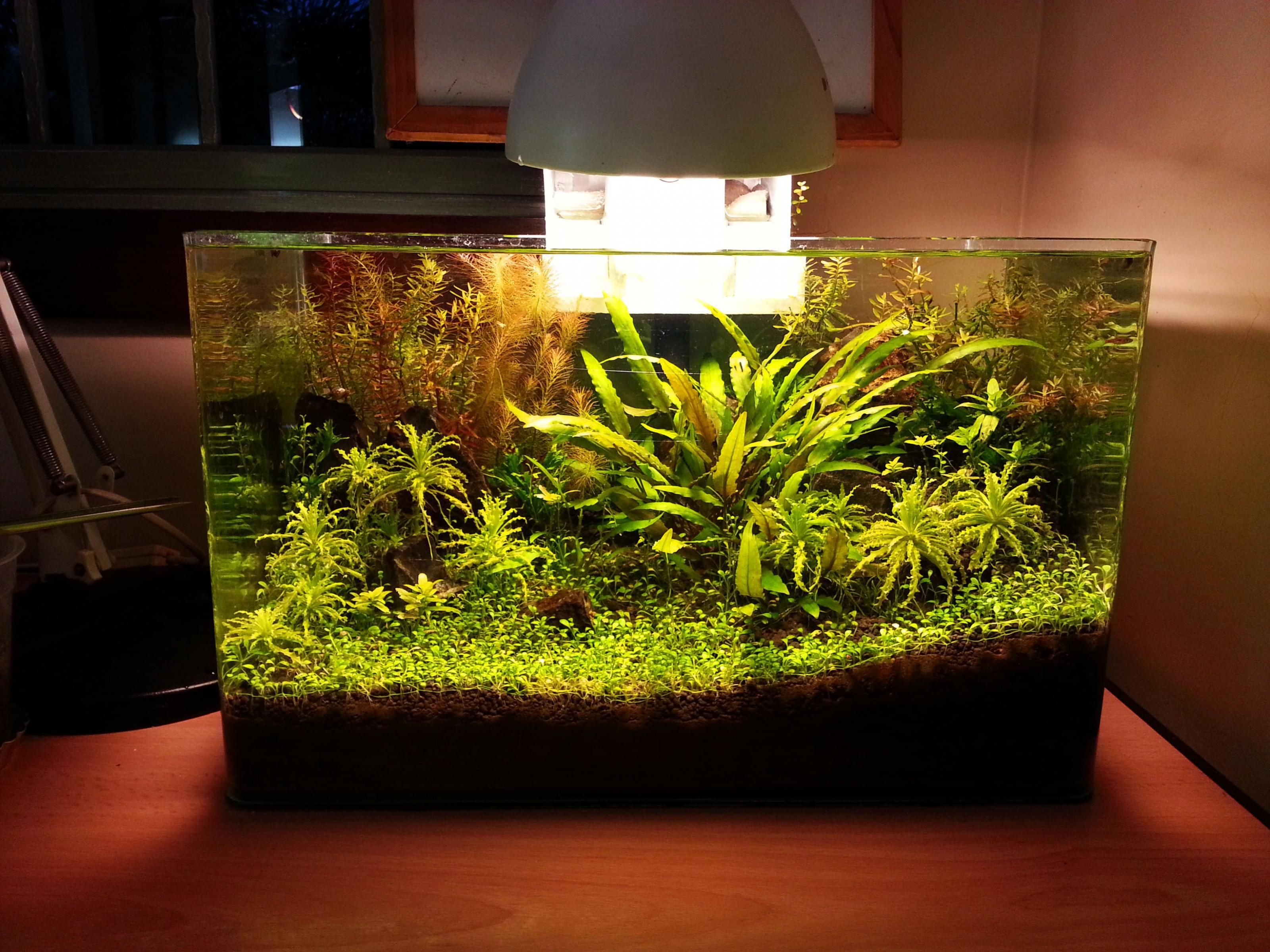 Freshwater aquarium fish no heater - Here Is My First Tank That I Started A Few Months Ago Its All Low Tech Except For Excel Dosing I Just Have Some Basic Low Light Plants Like Wistera
