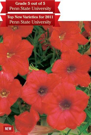 Deep Red Pleasure Of Surfinia Petunias Trailing Petunias