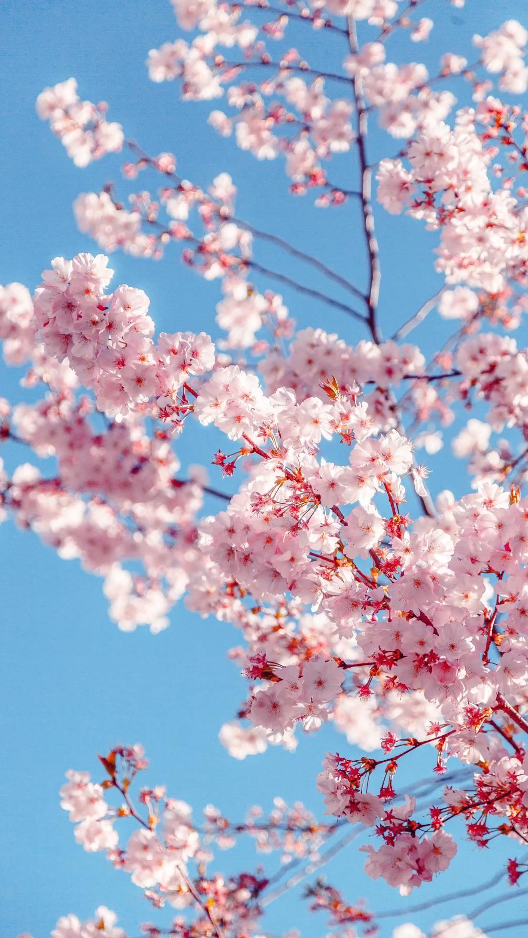 Plano de fundo céu/ flores/ natureza #natureza #flores #plantas #planodefundo #wallpaper