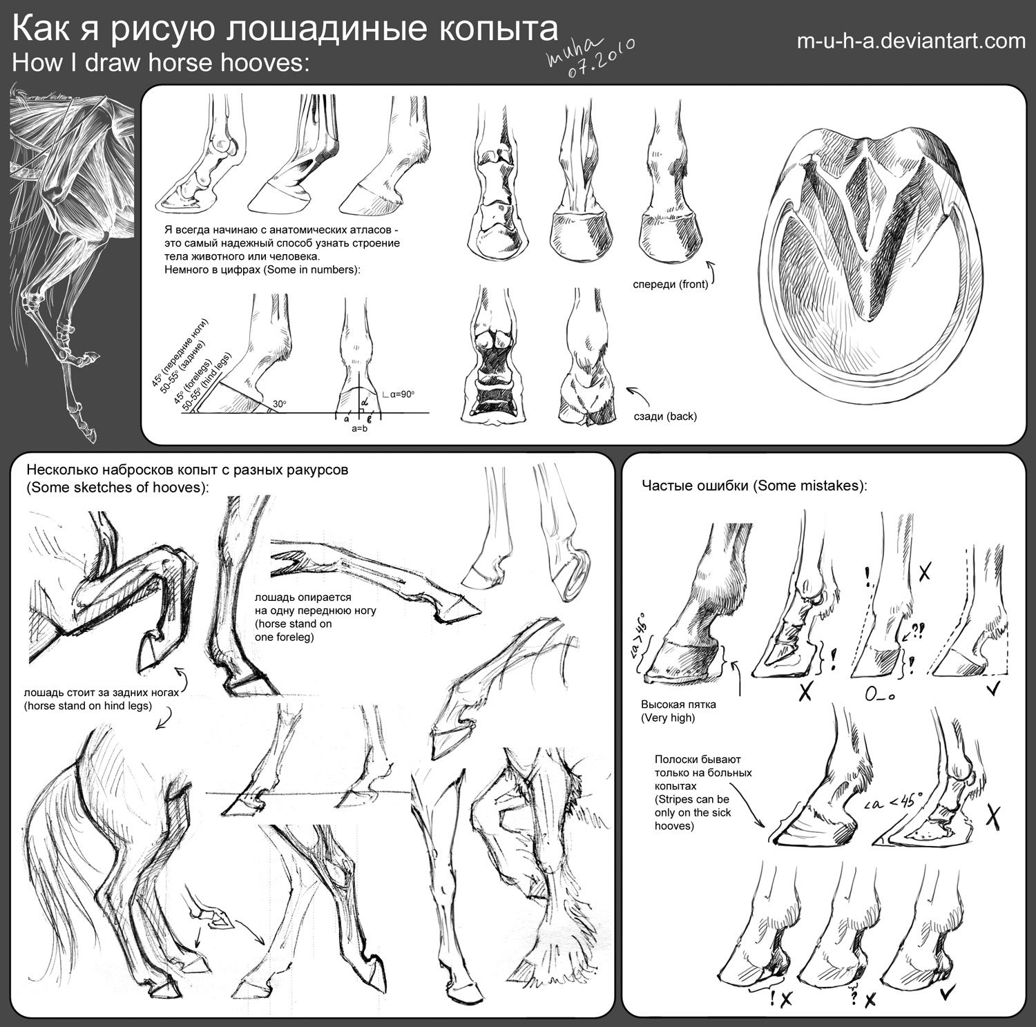 Tutorial - horse hooves by ~m-u-h-a on deviantART. Animal Anatomy ...