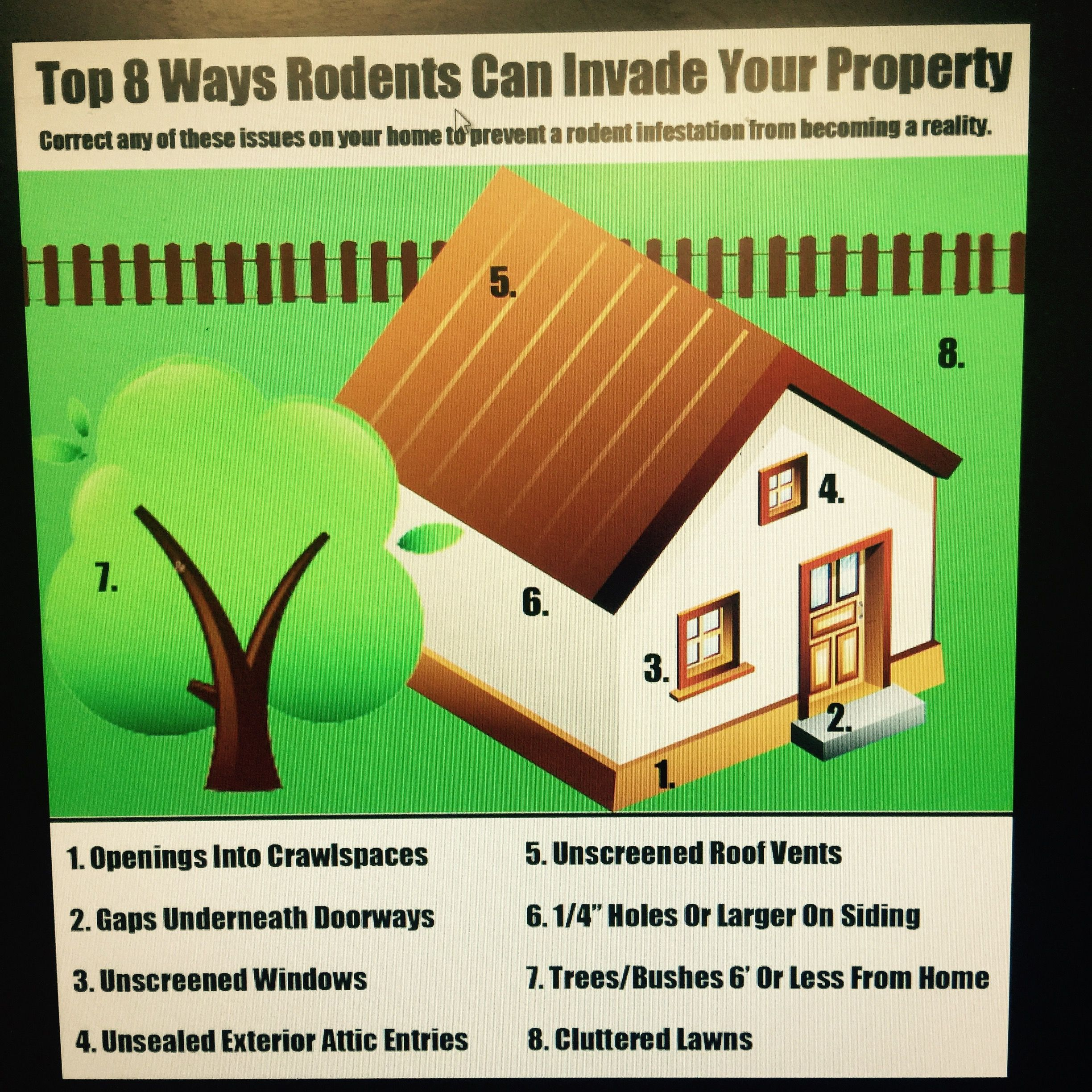 tips to rodent proof your home pest control diy pinterest