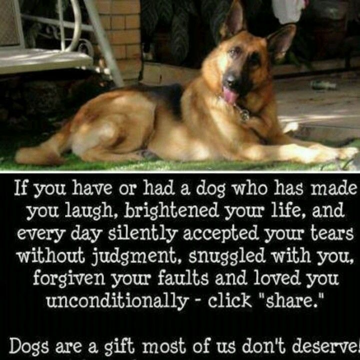 Love dogs!! DONT BE A HATER!