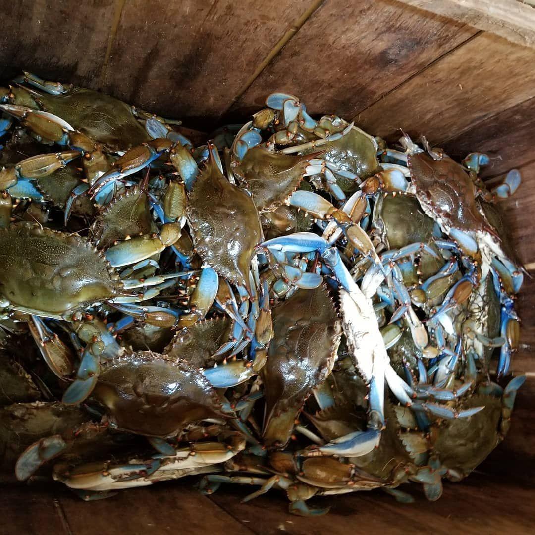 recipe: order live blue crabs online [13]