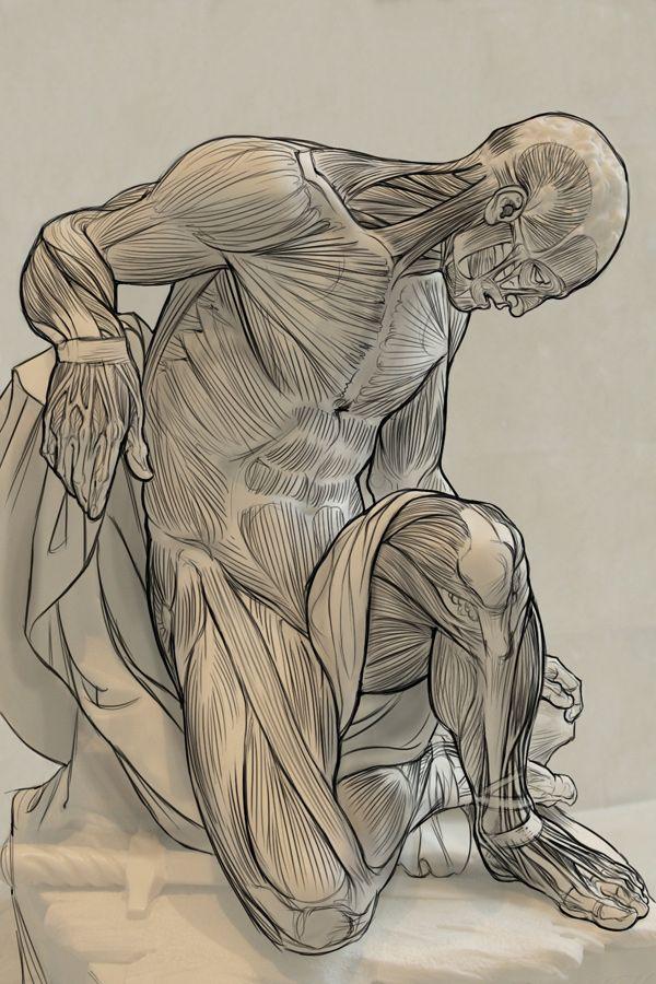 Human Anatomy Human Anatomy Art Anatomy Sculpture Human Anatomy For Artists